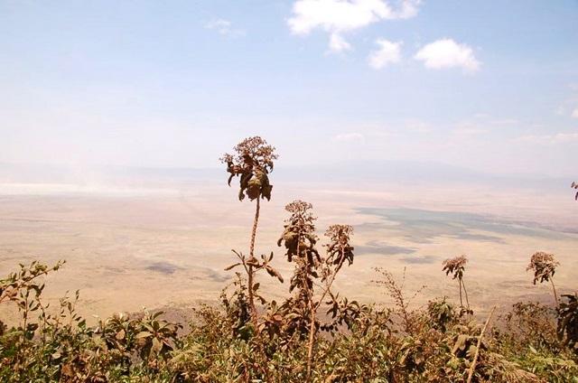 La llanura del Ngorongoro